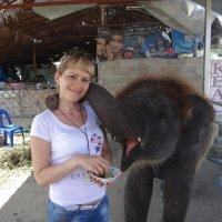 Милый слоник :: Лютик Лютик
