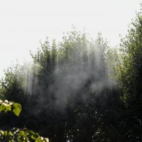 Туман :: Сергей Куликов