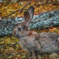 Кролик из лукоморья :: Алина Репко