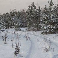 Дорога в зиму :: Елена Артамонова