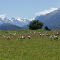 Новая Зеландия :: Irina Shtukmaster