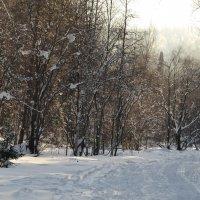 Февральская прогулка :: Татьяна Соловьева