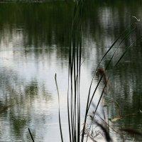 На забытом  пруду... :: Валерия  Полещикова