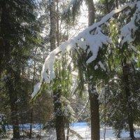 тает снег на ветках :: Елена
