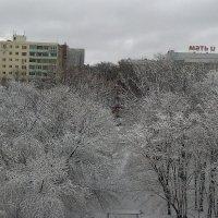 Зимний лес в городе :: Владимир Ростовский
