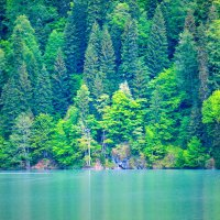 озеро Рица Абхазия :: Ирина Богатырёва