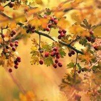 Осень -ювелир.. :: Ирина Сивовол