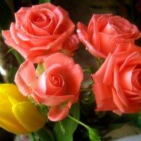 Розы и тюльпан :: Елена Семигина