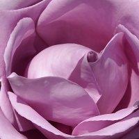 Цветочная палитра :: Swetlana V