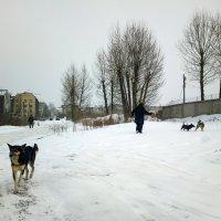 Собачья жизнь. :: Валерий Молоток