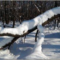 Ещё в лесу снега... :: Андрей Заломленков