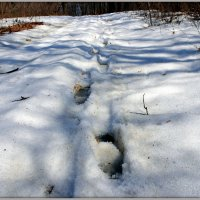 Следы на снегу :: Андрей Заломленков