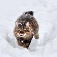 зимняя охота :: Валентина