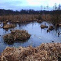 мартовское болото :: Александр Прокудин