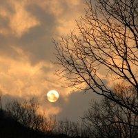 зимнее солнце :: Рада Казелло