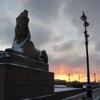 Один из сфинксов на Университетской набережной :: Елена Павлова (Смолова)