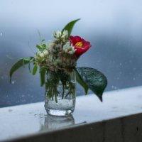 дождливое утро :: Slava Hamamoto