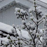 Вернулась зима??? :: Тамара (st.tamara)
