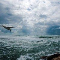 Над седой равниной моря.......... :: Евгений Якубсон