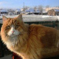 зимний кот) :: Анна