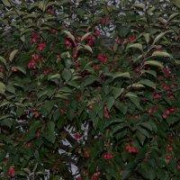 удивительное дерево с плодами... круглый год) :: Галина R...