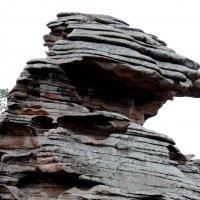 Сосна на скале :: Асылбек Айманов