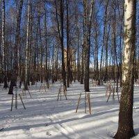 Зима у нас долго запрягает, но не вдруг и проходит :: Андрей Лукьянов
