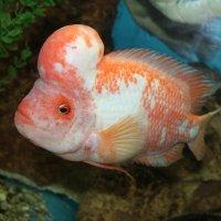 аквариумные рыбы :: elena manas