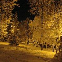 Вечерний парк. Деревья в снегу, освещенные фонарями. :: Сергей Тагиров
