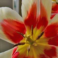 Нежность весны :: Татьяна Кретова