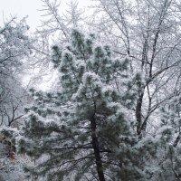 Последний вздох зимы 2 :: Сергей Шруба