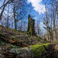 Весенний лес :: Александр Земляной