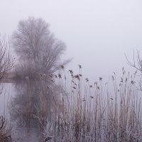 Опустилось небо на землю :: Елена Пономарева