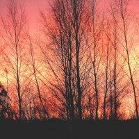 на мороз . закат. :: petyxov петухов