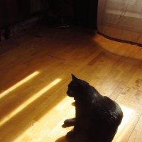 Черная кошка в светлой комнате :: Андрей Лукьянов