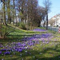 """""""Всё больше солнца в цветогамме дня... И нежности - до головокруженья..."""" :: Galina Dzubina"""