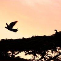 Птичьи заботы :: Ольга Голубева