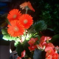 Ноябрьская красота :: Нина Корешкова