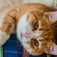 Вот на кошках и тренируюсь :: Валерий Смирнов
