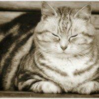 Из жизни котов . Итальянец , выпил вина и отдыхает . :: Игорь Абламейко
