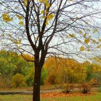 Облетели листья... :: Александр Атаулин