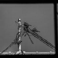 птицы на Бали2 :: Александр