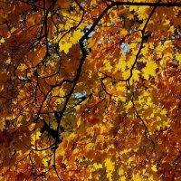 Золотая осень :: Владимир Бровко