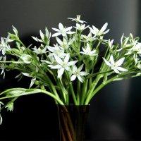 С весенним праздником Навруз! :: Светлана