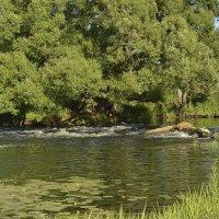 Река-реченька.. :: Алла Кочергина