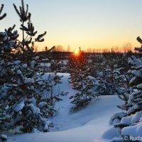 Закат за елками :: Сергей