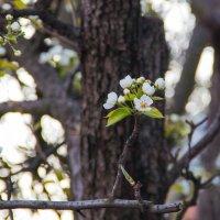 весна :: Елена Константиниди