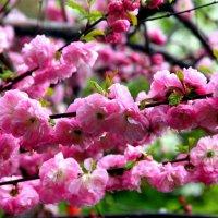 Весна :: Елена Кирилова