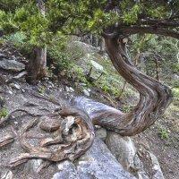 И на камнях растут деревья. :: Татьяна Бобкова