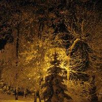 Елочка в зимнем парке освещенная светом фонаря :: Сергей Тагиров